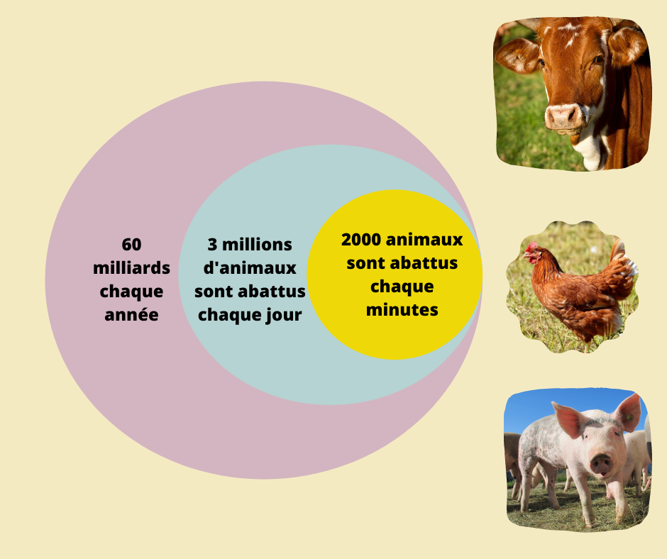 Chiffres sur les animaux tués chaque jour
